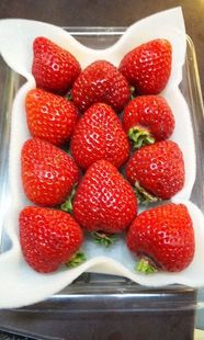 2010/03/18 (Thu) STRAWBERRY◇◆