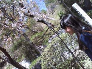 2011/04/17 (Sun) 桜withまみ